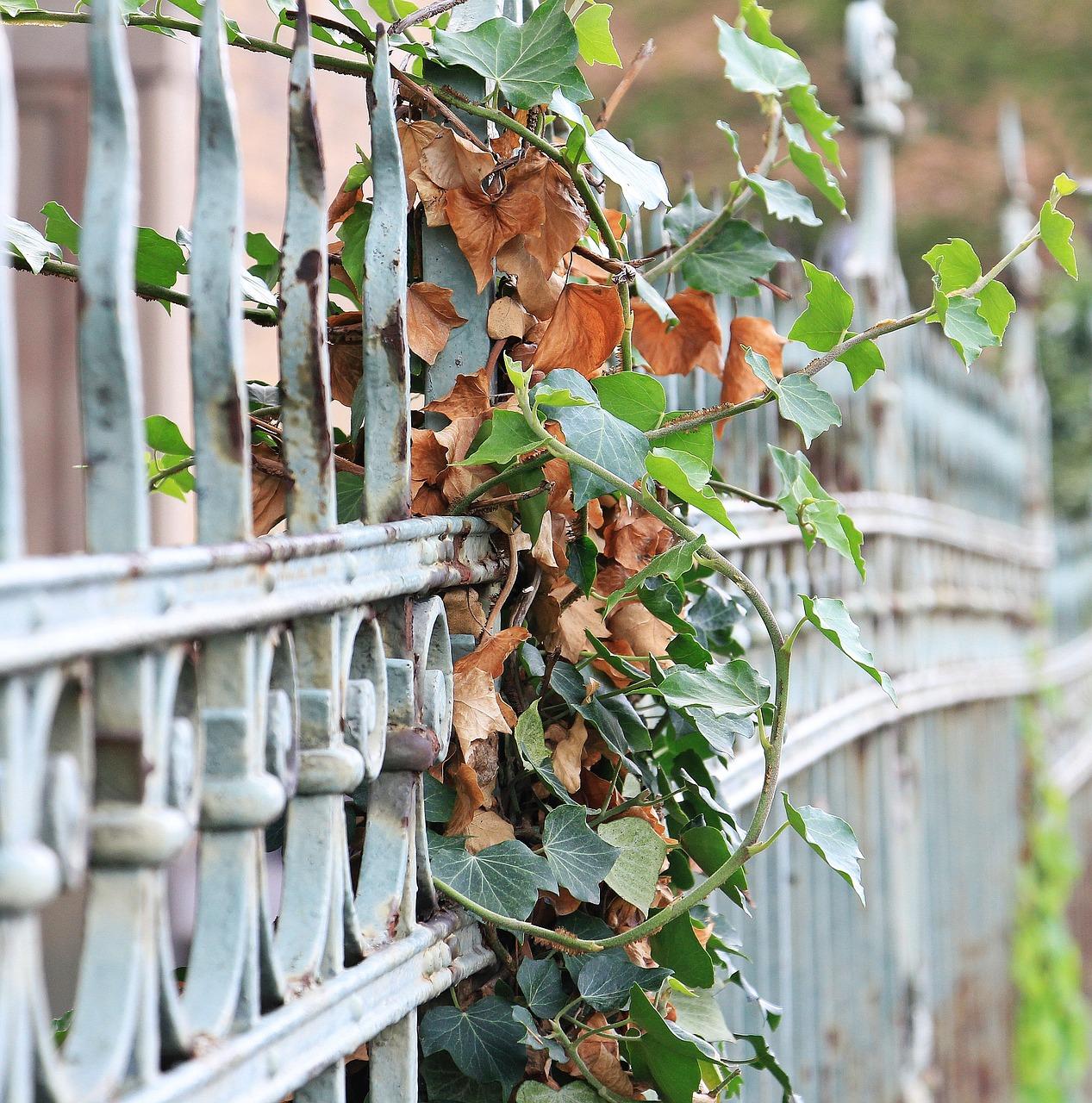 fence-1543108_1280.jpg