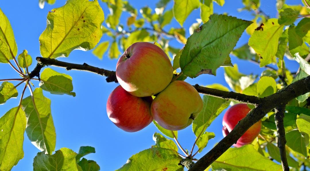good+fruit.jpg