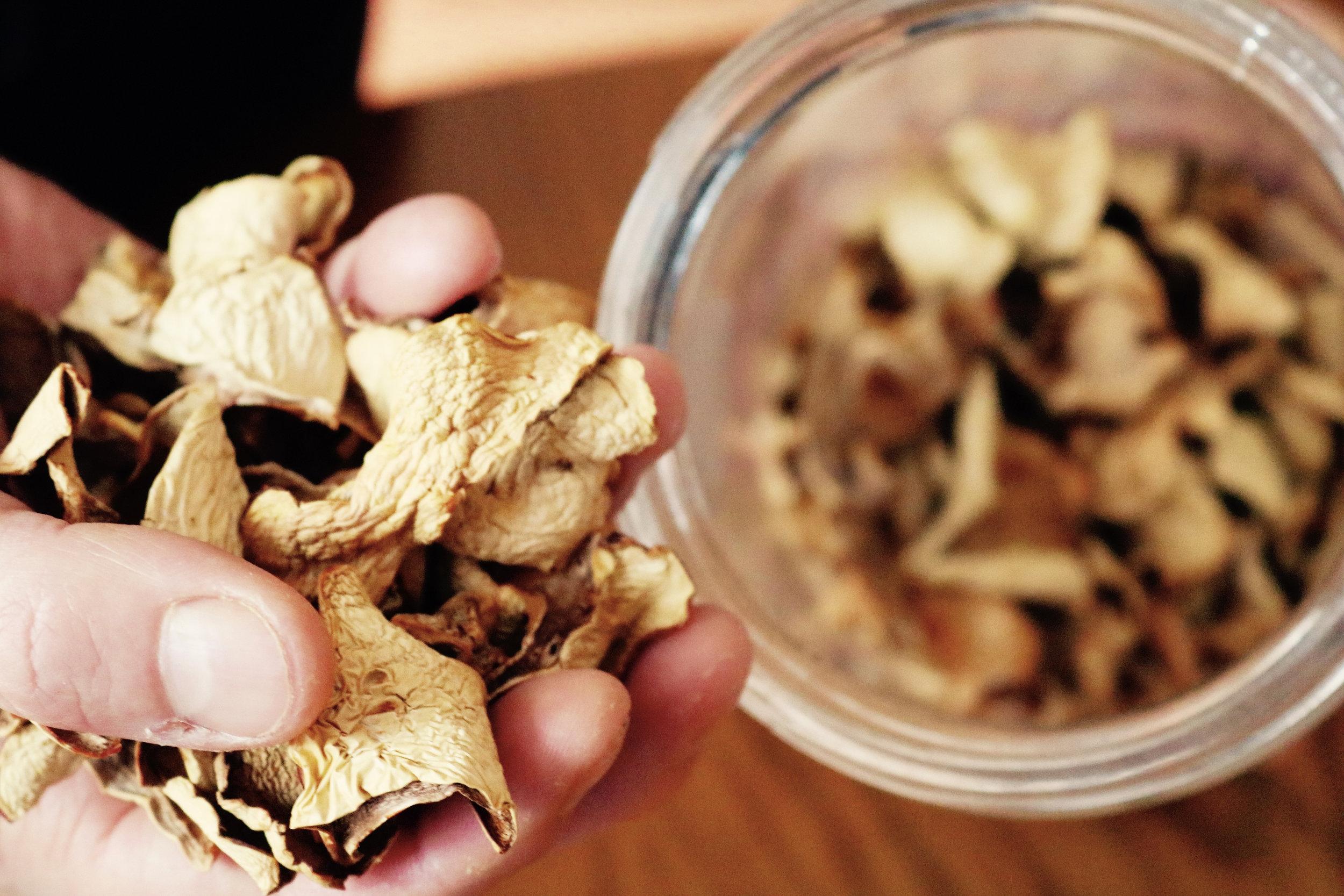 Dried Mushrooms.jpg