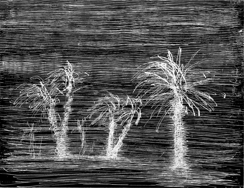 scratchy-palm-trees.jpg