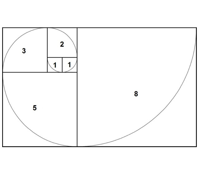 Sometimes called the Golden Spiral, the Fibonacci sequence appears throughout nature as a mathematical pattern in shells, sunflowers, pinecones, and many other forms.