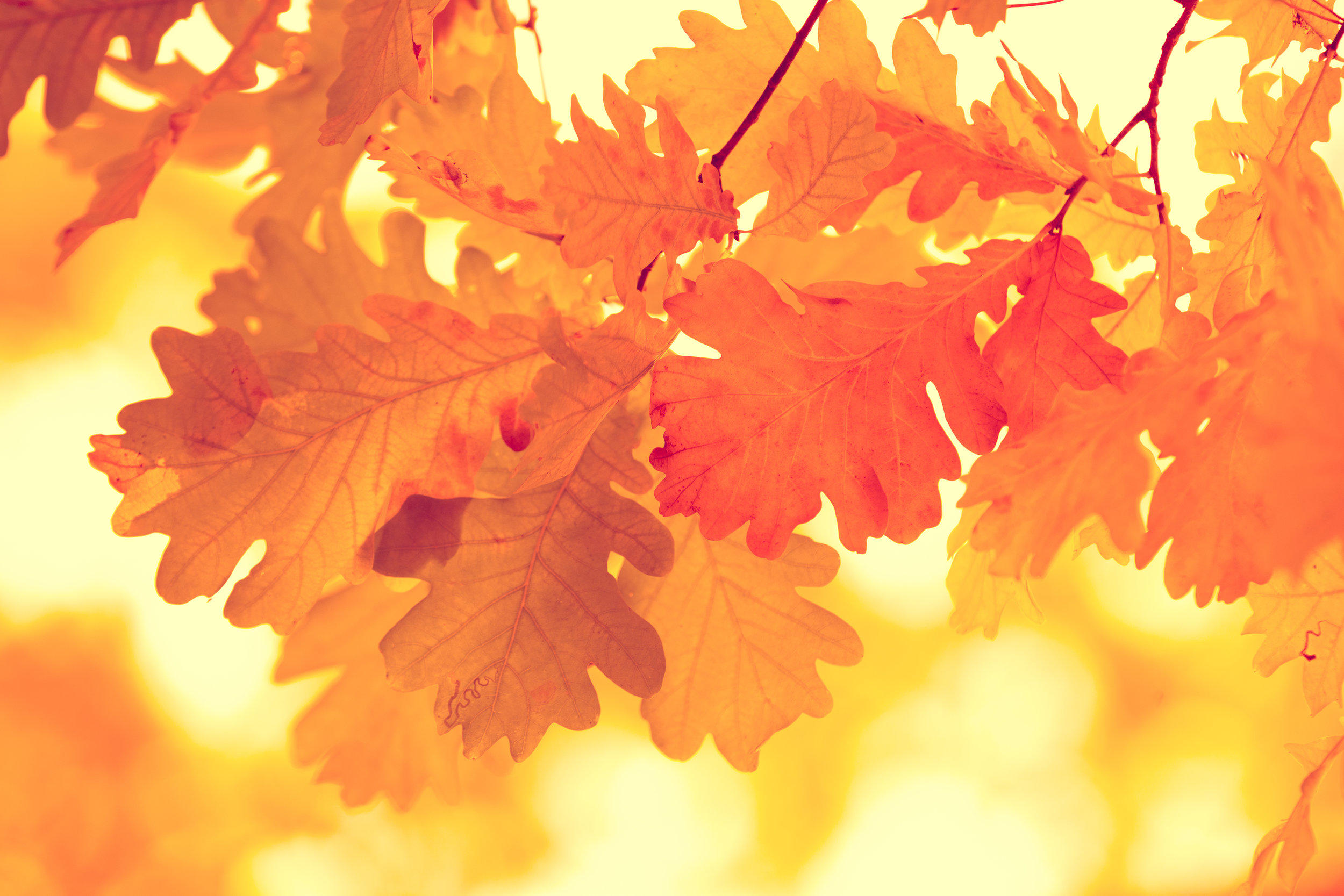 storyblocks-oak-branch-with-yellow-leaves-in-the-forest-in-autumn_r8ehvBqDJM.jpg
