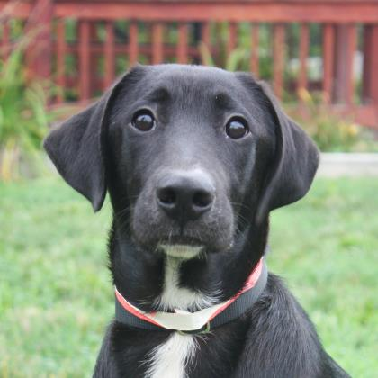Click on Thumper (this sweetie who is up for adoption)to volunteer at Humane Society of Huron Valley