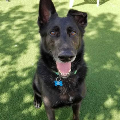 Just in case you're in Denver, Bert is available to go for a run or...become your new best friend when you adopt him.