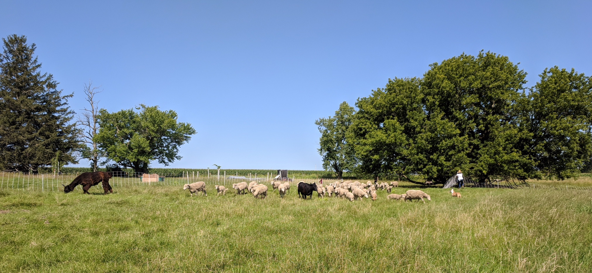 Jóia Food Farm - A regenerative organic farm   bringing humanely-raised meats and eggs to your table.