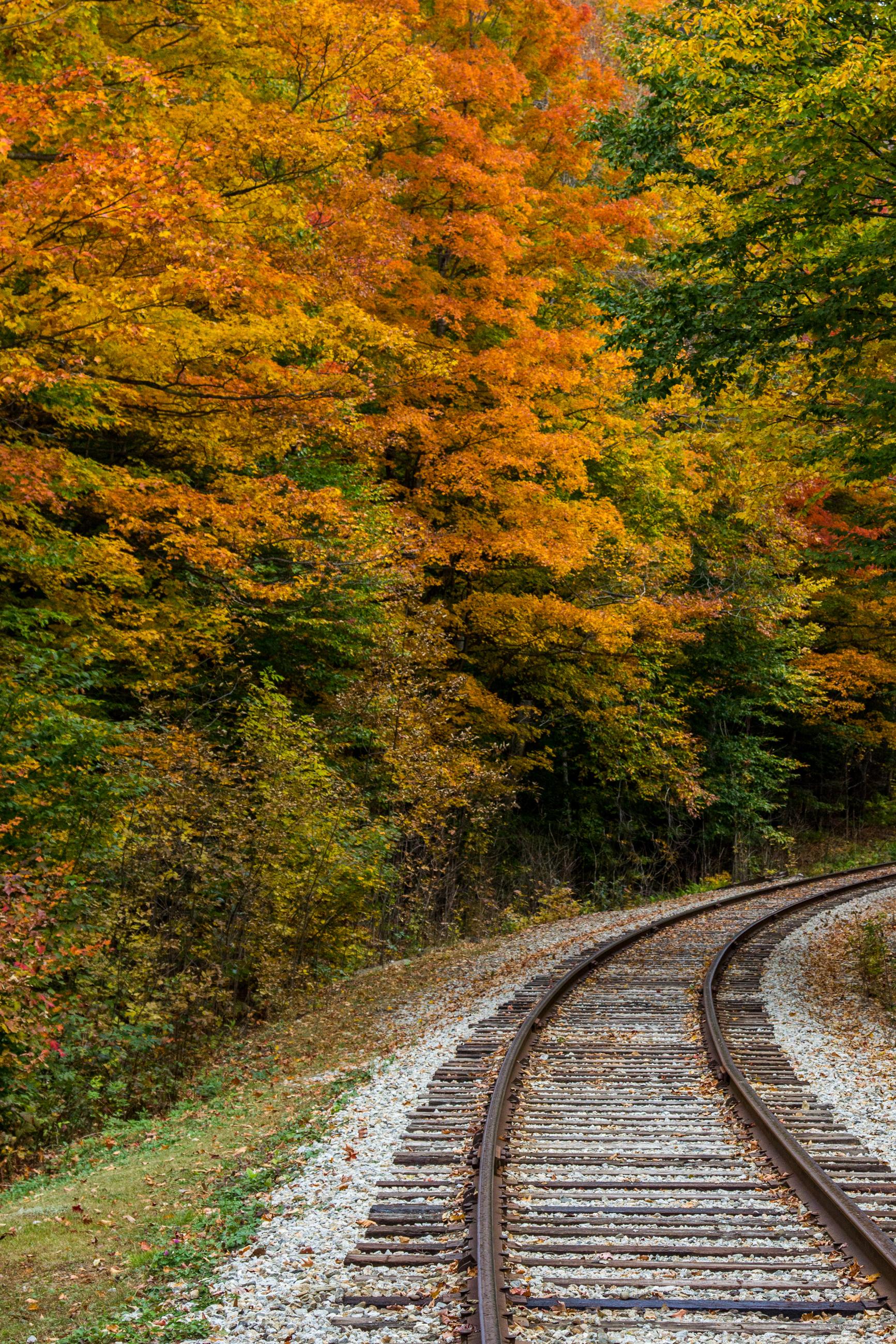 Tracks Through Fall