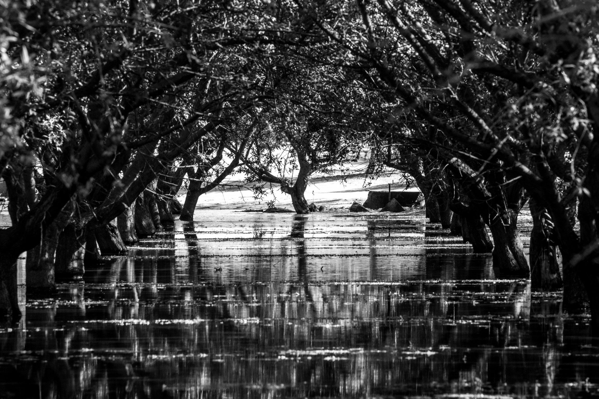 Flood Row