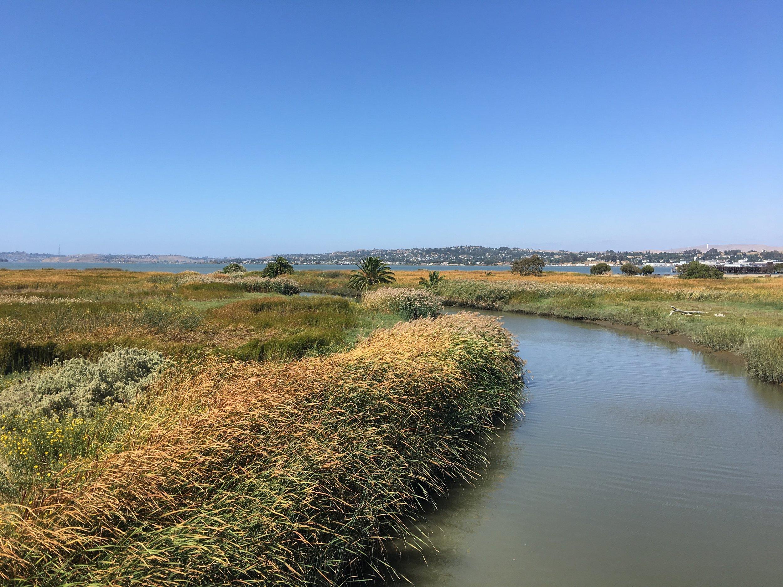 Flood Resilience + Climate Adaptation