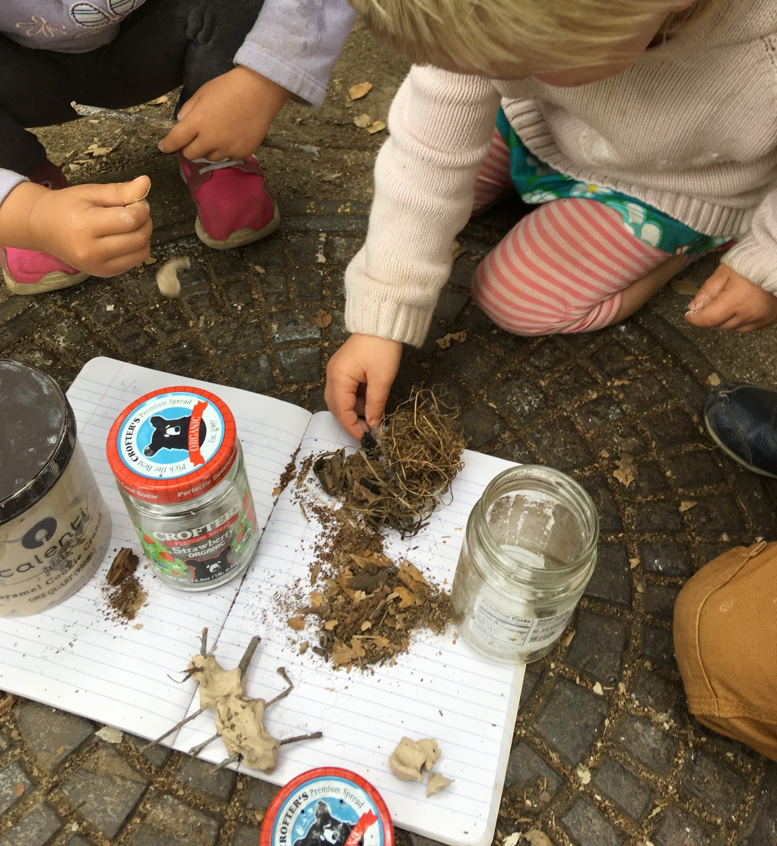 Field journals, bug observations, and expression of scientific findings through clay.