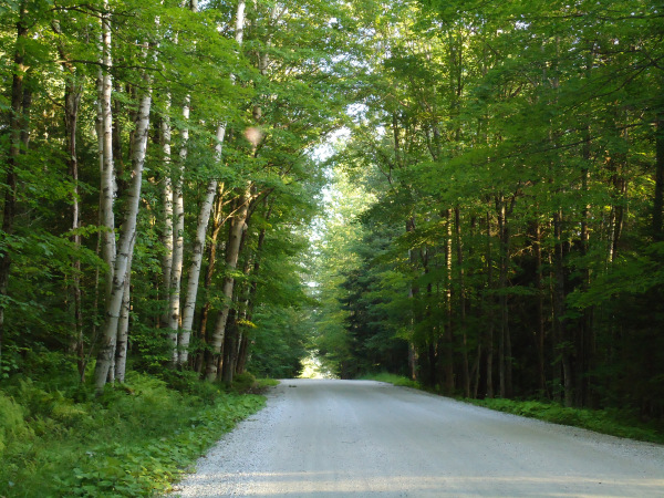 Our road in Vermont. Internet? No. Moose? Yes.
