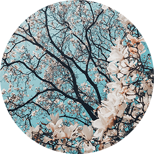 Christine Jones - Cherry Blossom Gal.png