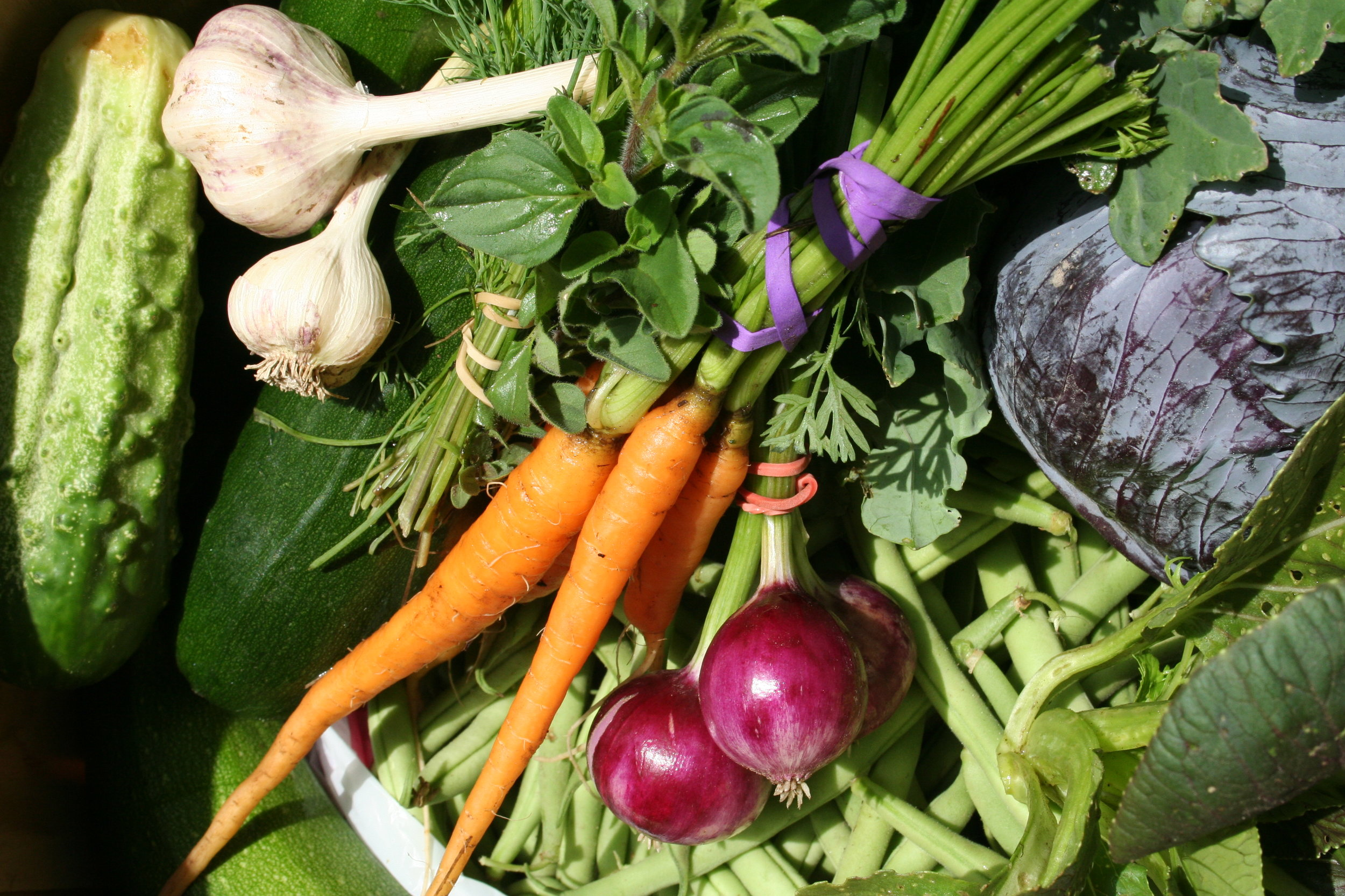 An early July 2014 basket from Riverbow Farm, Louise's CSA farm in Canton