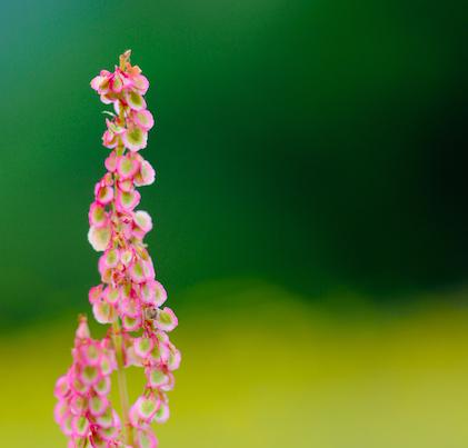 Haymeadow%20flower%204.jpg