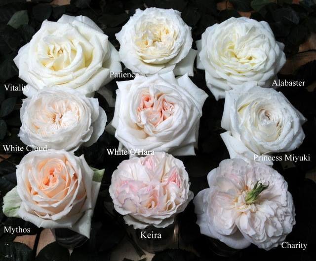 A garden rose can be a good alternative