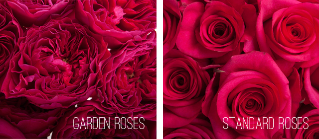 Garden rose: 3-5 days vase life, Scented, High petal count.  Standard rose: 7-14 days vase life, usually non scented, uniform straight petals.