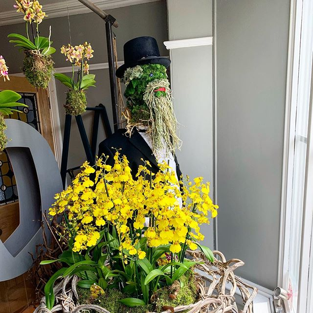 Benedikt Roezl reporting for scarecrow trail duty #lymmfestival  This years theme is explorers so who better that A Victorian Orchid Hunter. Grab your scarecrow trail map from #Lymm village hall. 20th -30th June........ come find Benedikt!