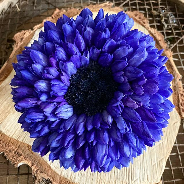 A blue bridal bouquet to brighten a pretty drizzly day! #blue #petitebridalflowers #blueflowers #bridalbouquet #bridal