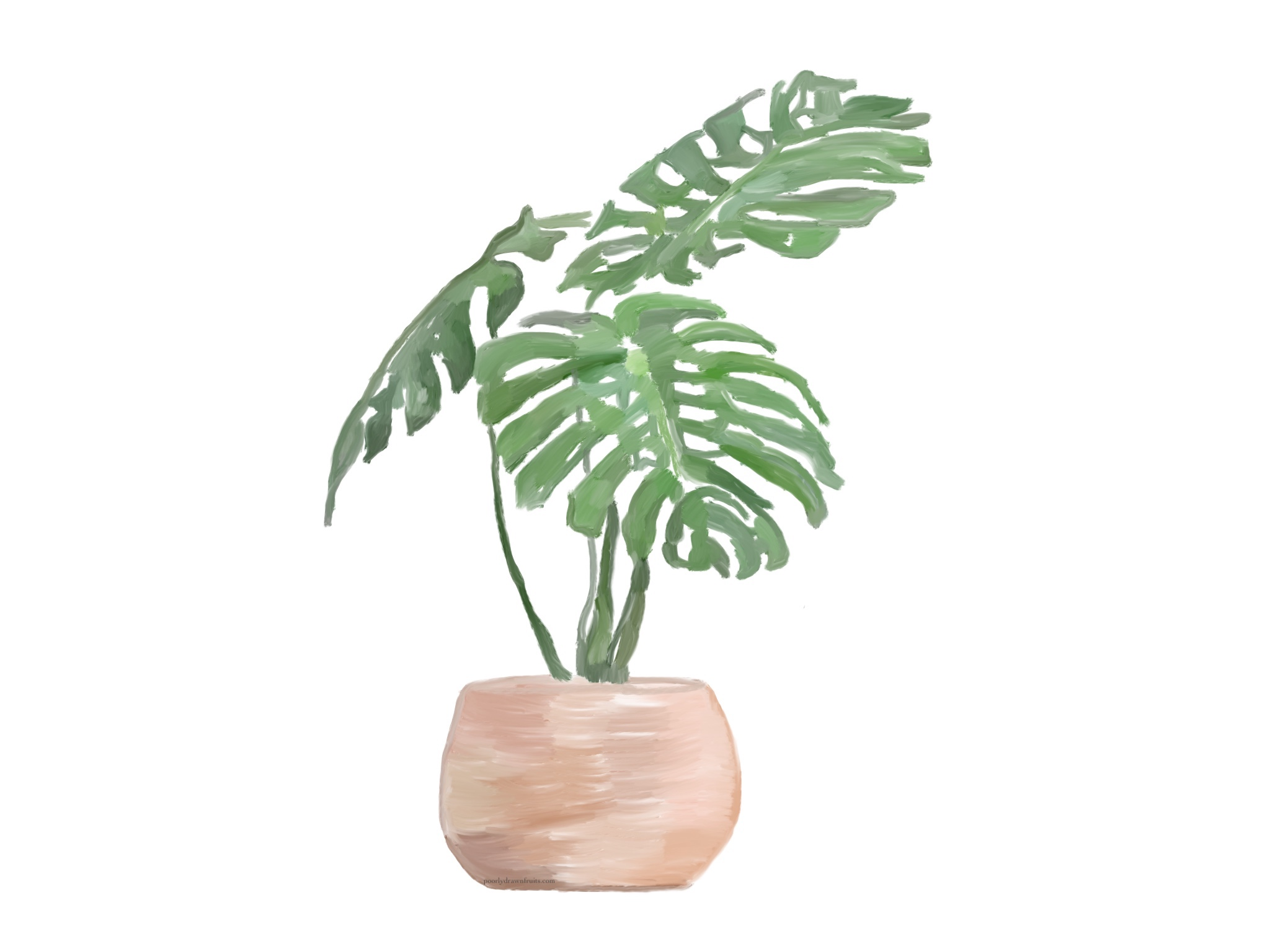 monstera deliciosa - plant drawing - plant painting