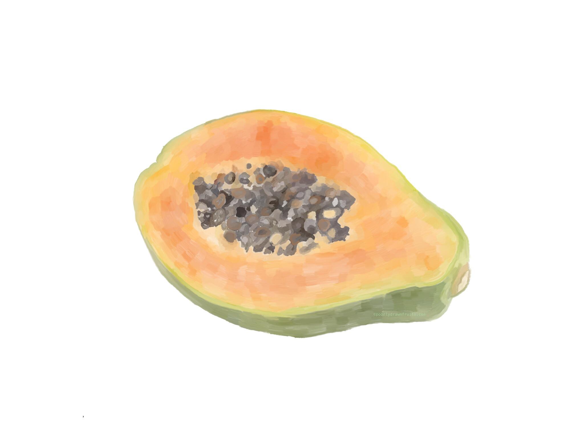 papaya - drawn - fruit - painting - tracing