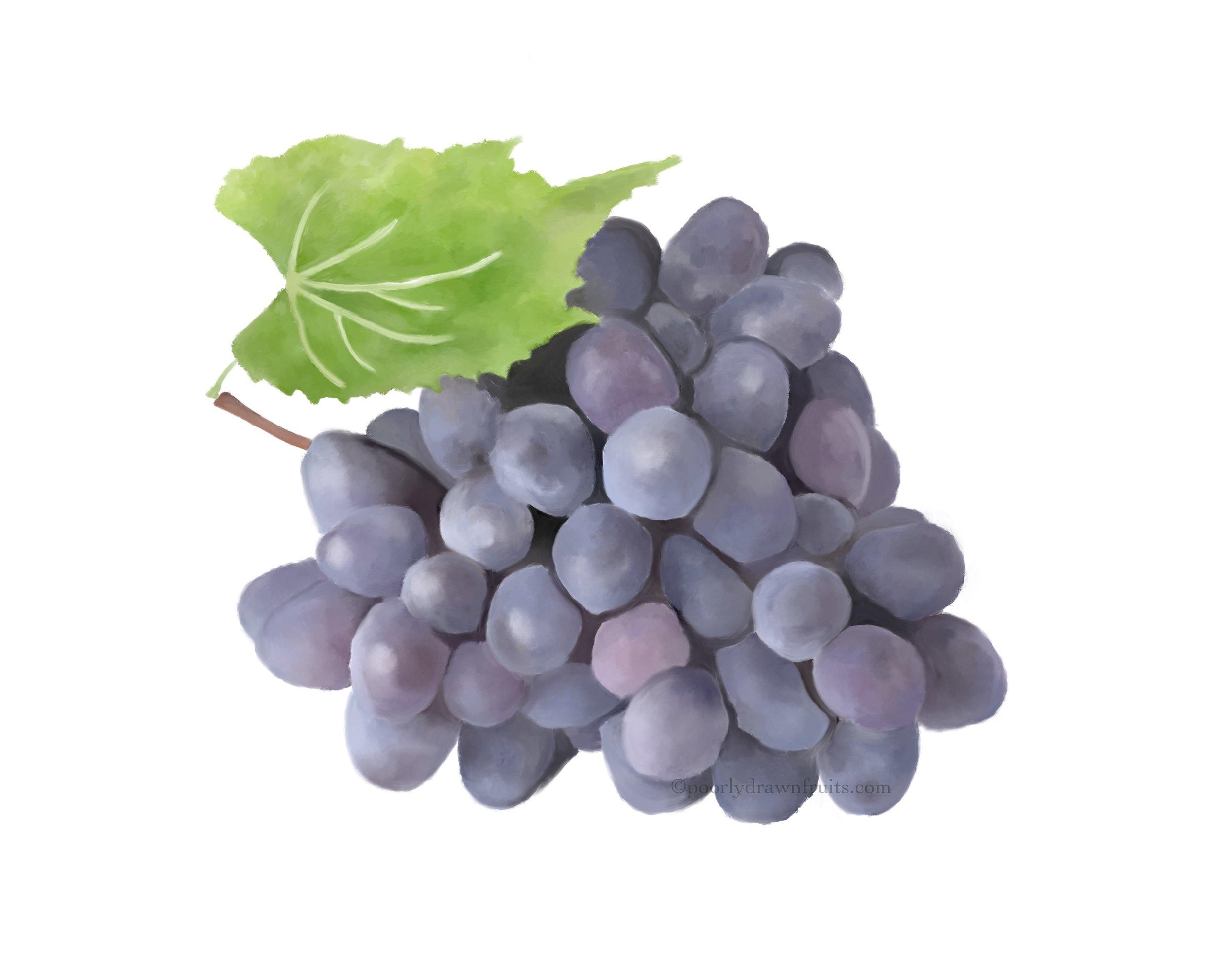 grapes, grape drawing, grape painting, digital grapes, digital painting