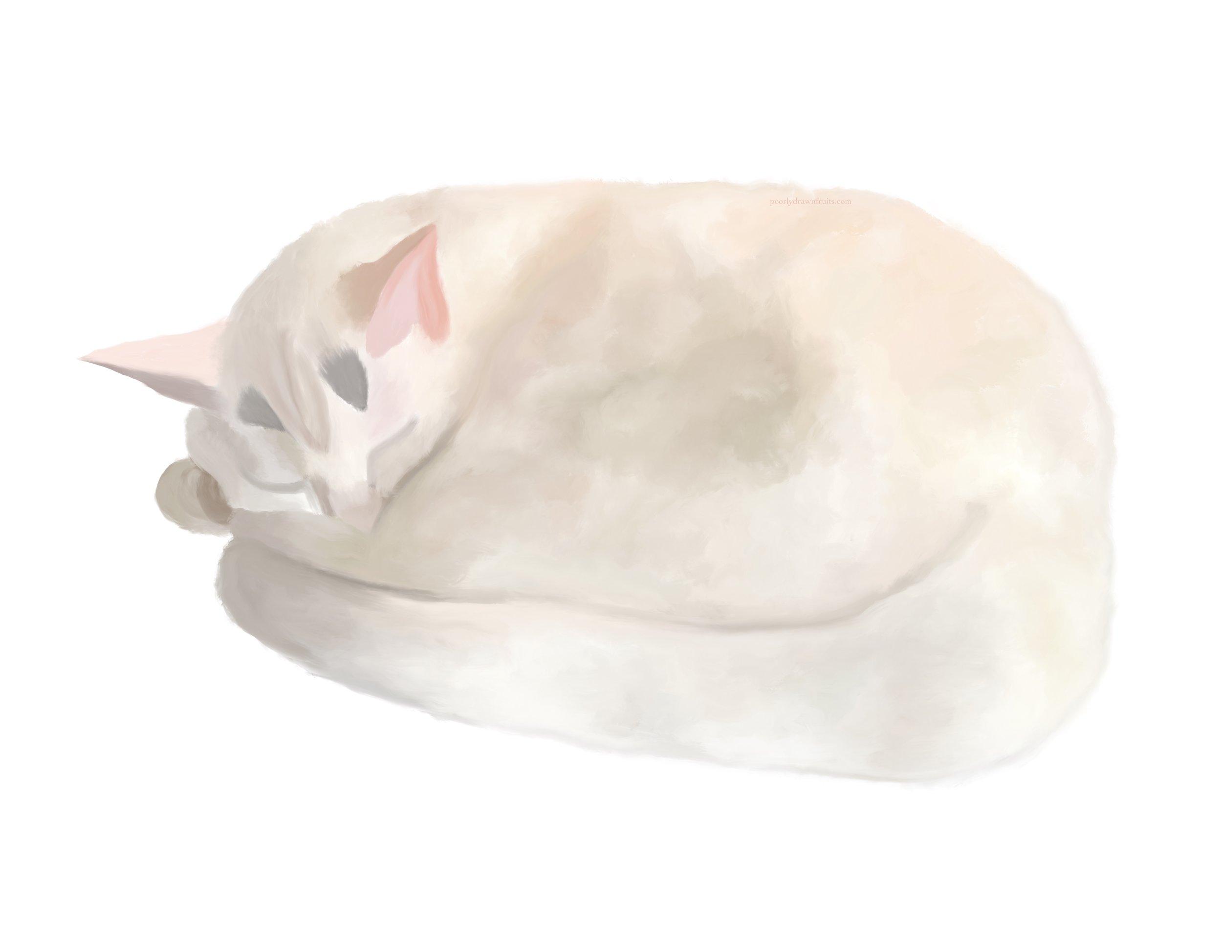 cat, cats, sleeping cat, painting, digital painting, ipad, procreate, kitten, white cat