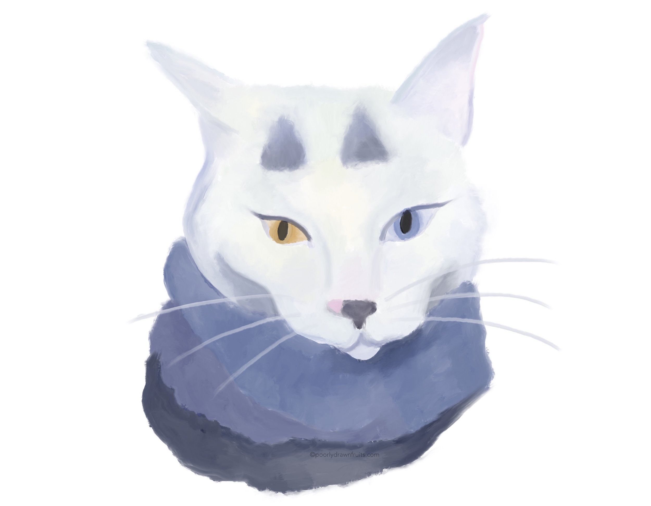cat, scarf, white cat, meow, odd eyed