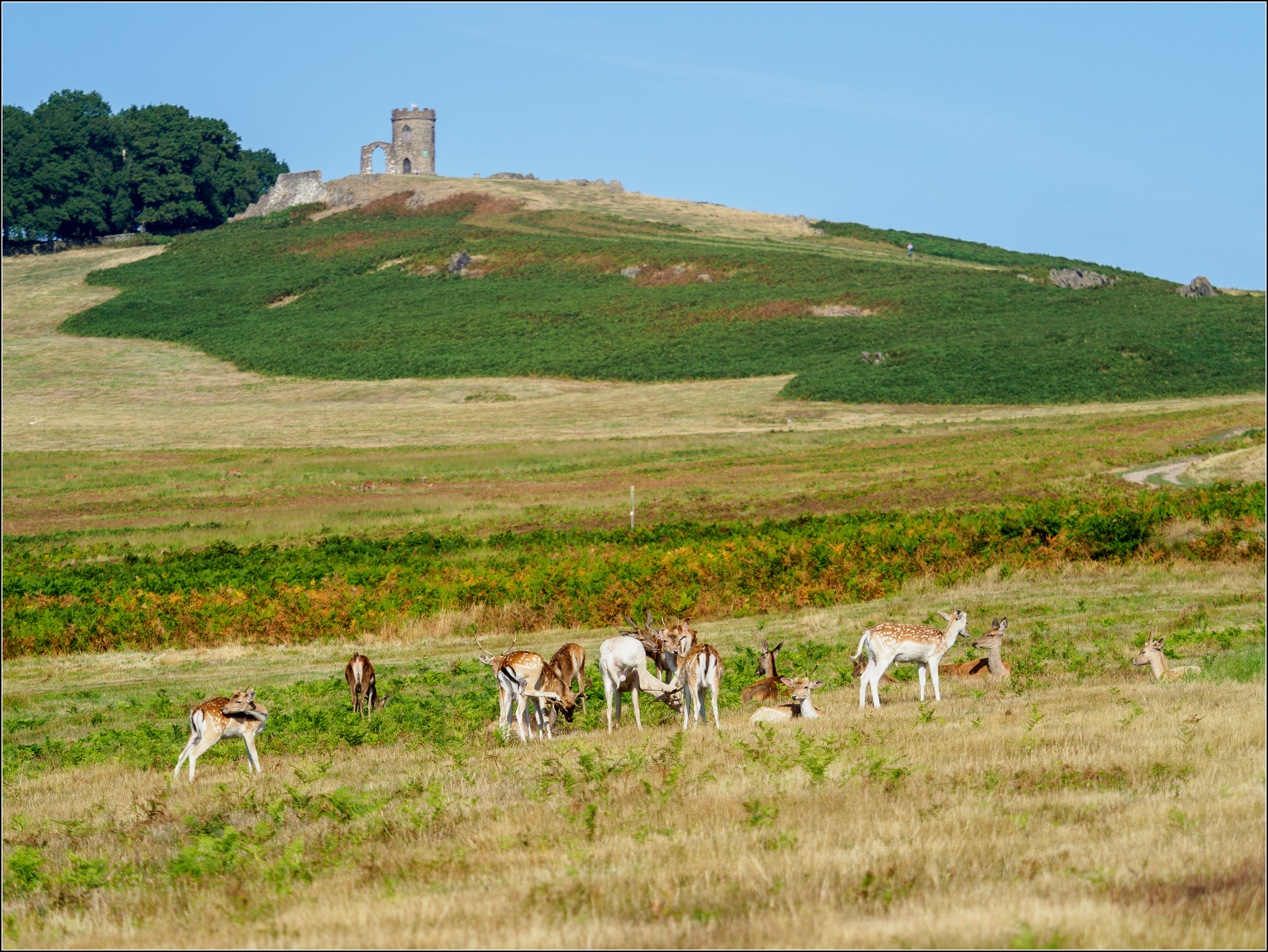 Bradgate in a nutshell, by    Phil Mclver