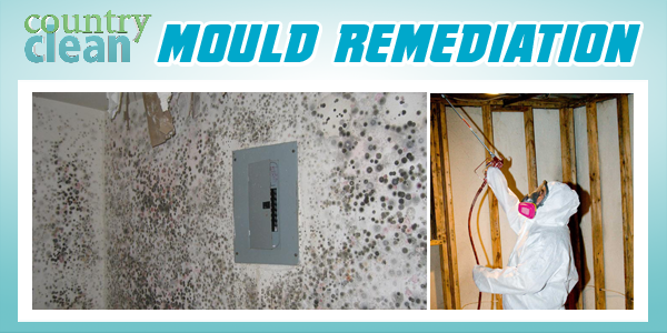 New Services MOULD REMEDIATION.png