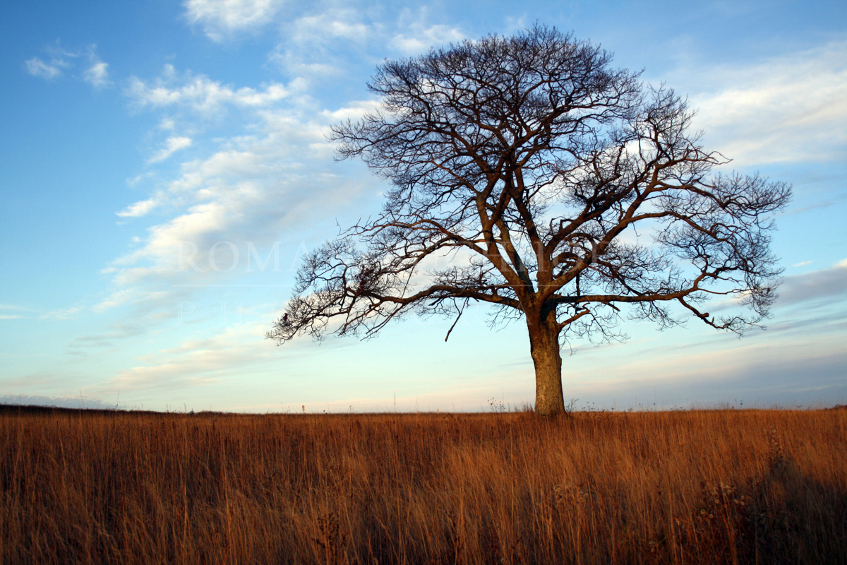 Shubenacadie Tree