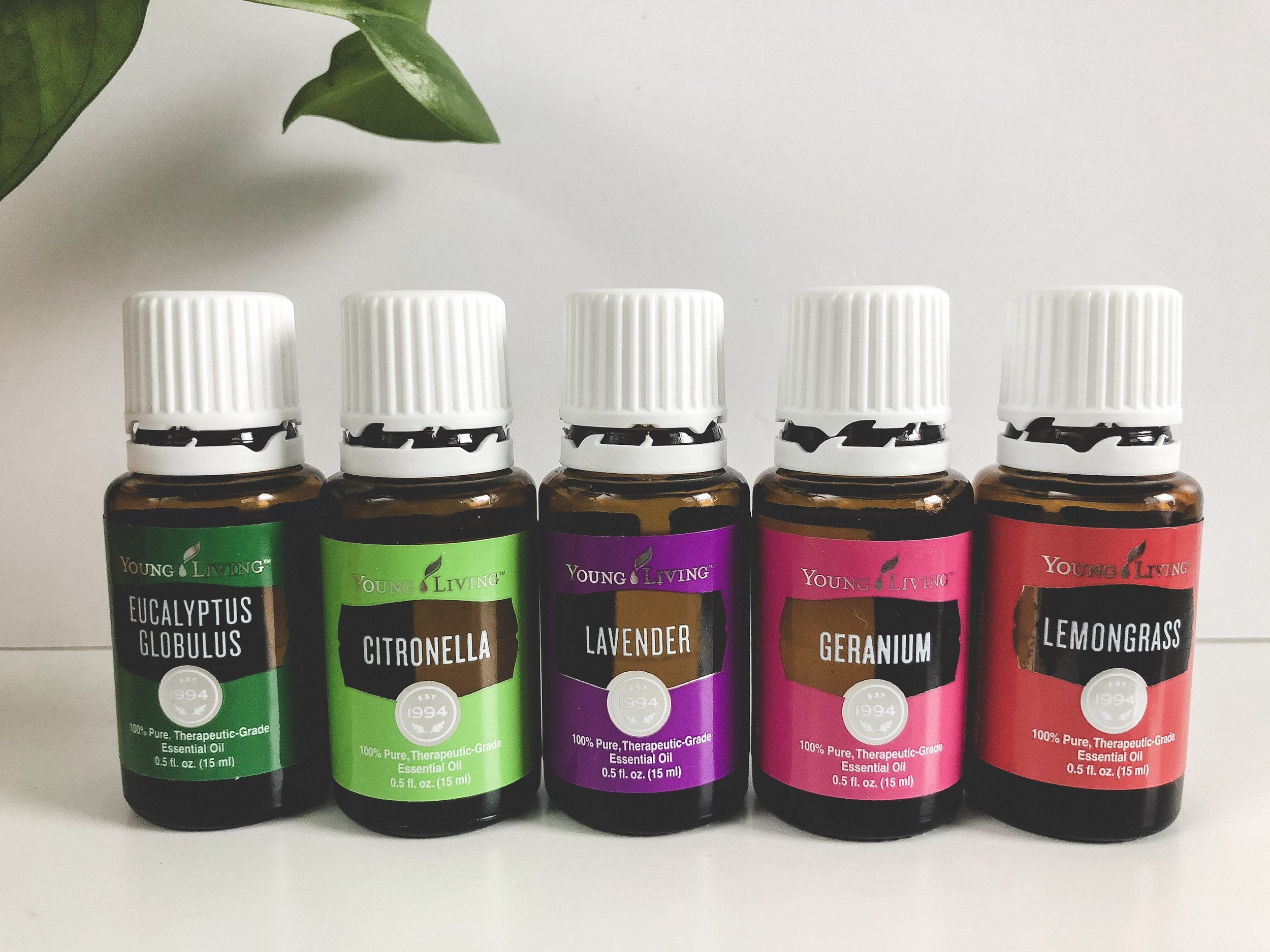 young living essential oils for mosquito repellent