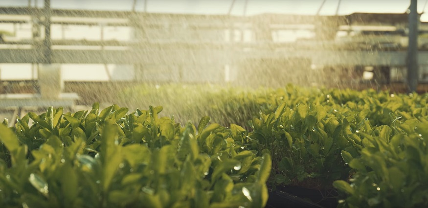 plants getting watered.jpg