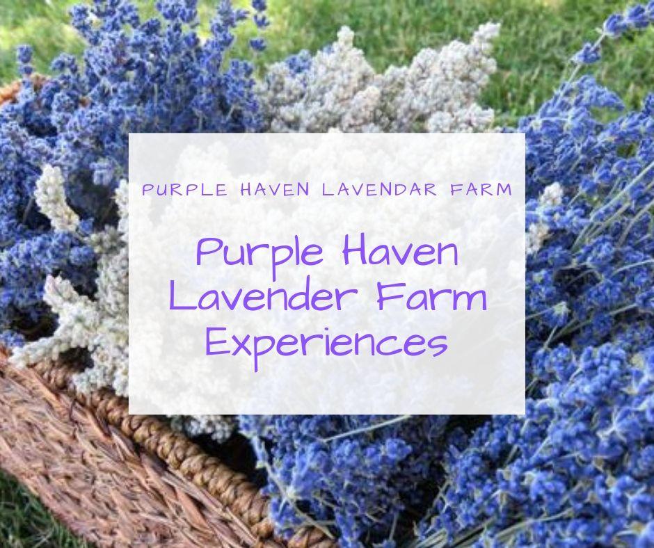 Purple Haven Lavender Farm Experiences.jpg