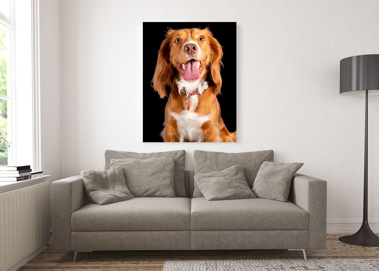 Cocker Spaniel large acrylic