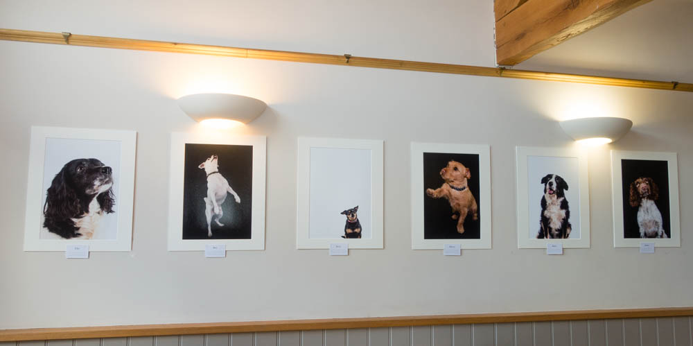 Paw Prints launch exhibition at The Sun Inn, Pickering
