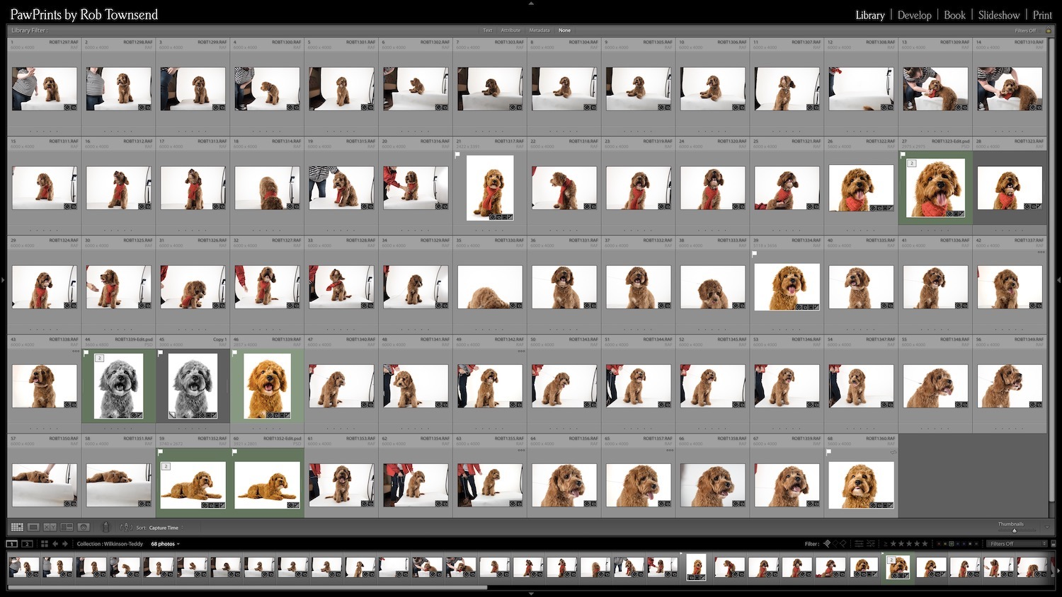 Editing pet photography