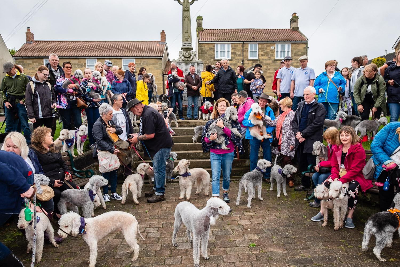 Bedlington Terrier Gathering 2018