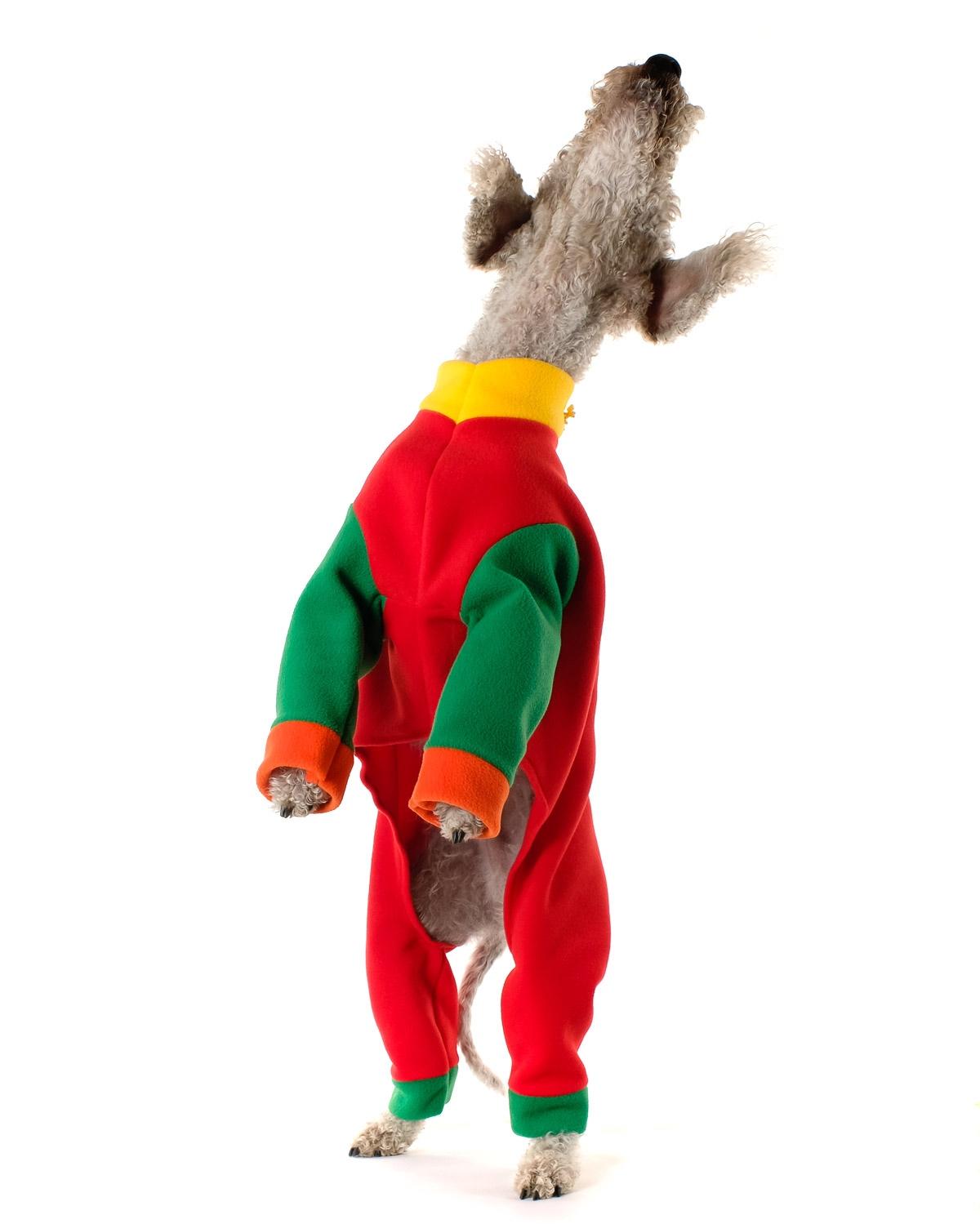 Bedlington Terrier in colourful costume