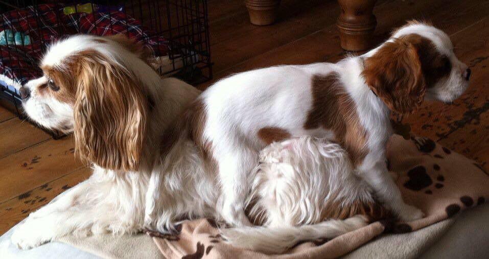 Tooty and Jasper