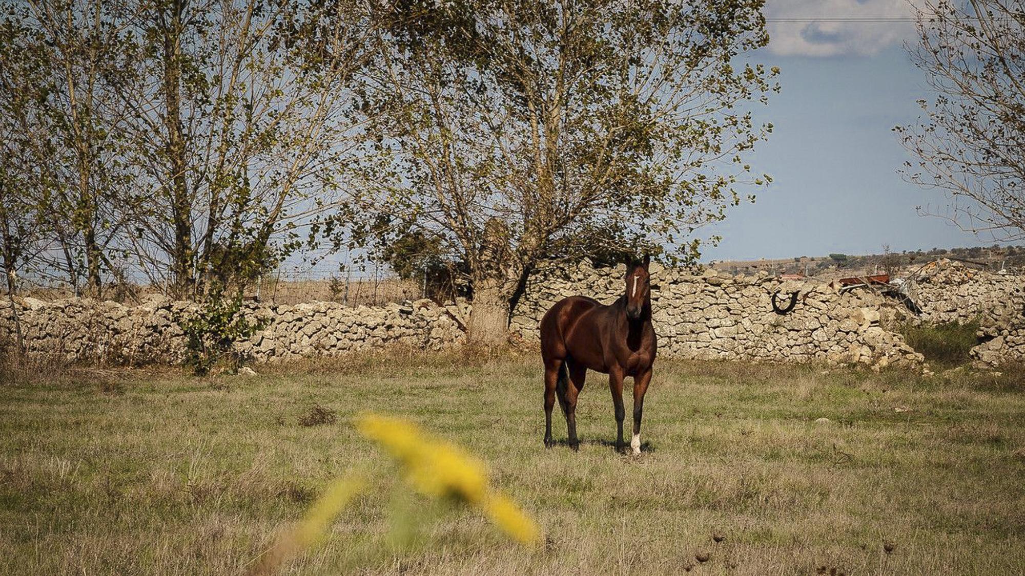 WILD HORSES AT GIARA PLAINS