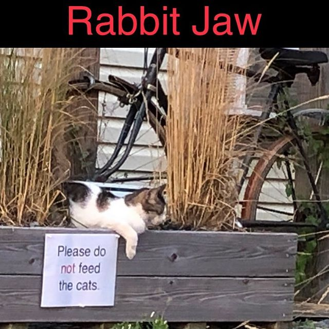 Rabbit Jaw @ Dalmatia Hotel  Friday August 16 7 to 10 pm! #rabbit_jaw #rabbitjaw #music #people #fun #cats #food #life #buffalo #buffalove #rock #love