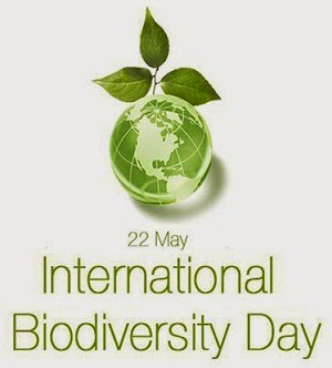 22-May-International-Biodiversity-Day-Green-Earth-Globe.jpg