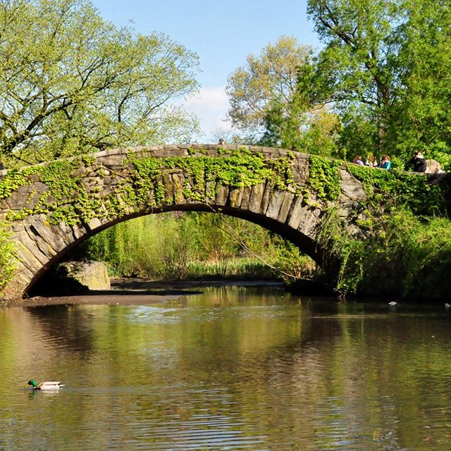 Grateful to have had precious moments of #spring while in #nyc for work a few weeks ago. Crisp air, blue sky and bursts of green are good for the soul. 🌞 #sunnyday #centralpark #bridge #nofilter 📷: @future.lex