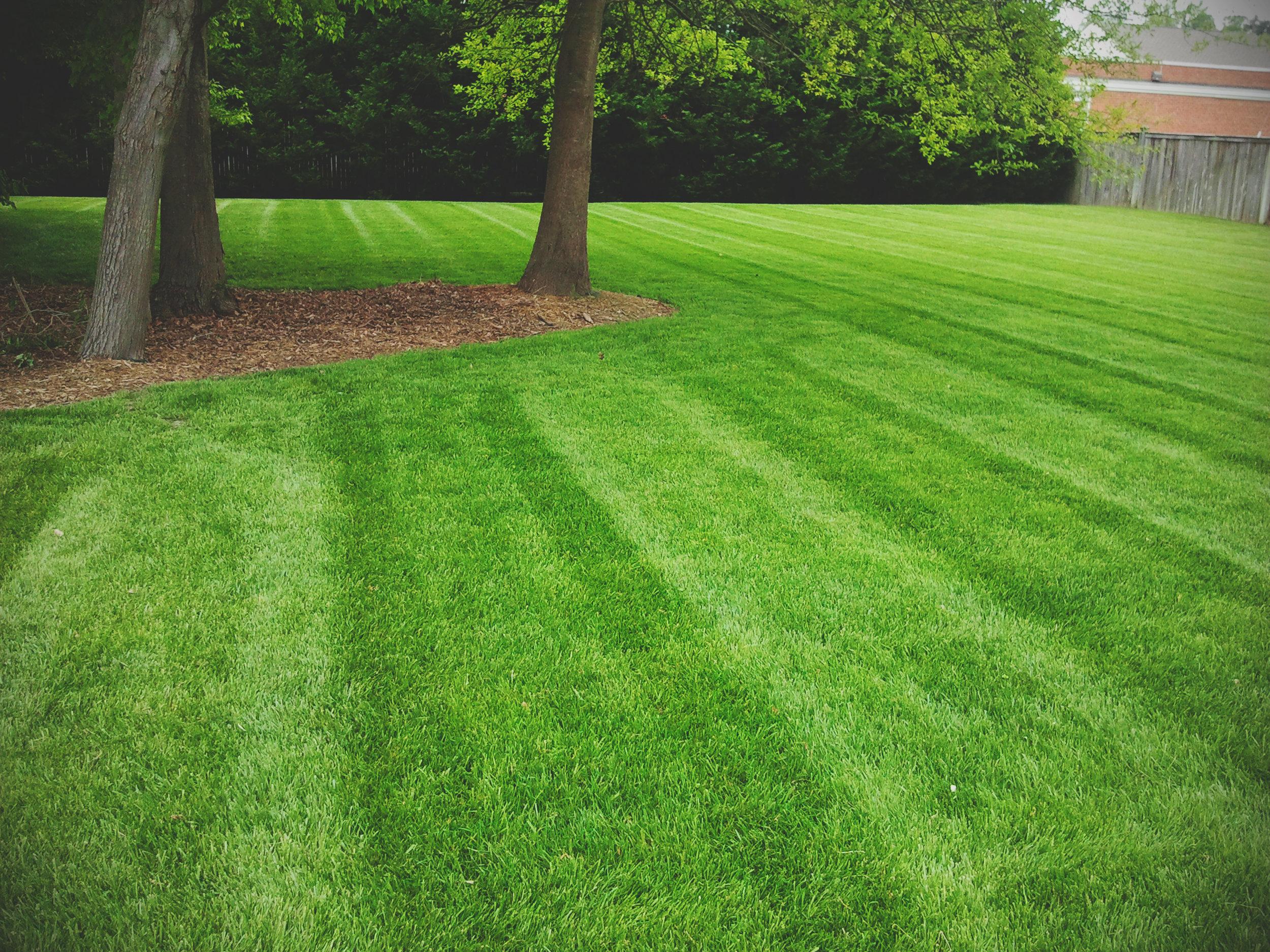 beautiful-stripes-chesapeake-lawn2.jpg