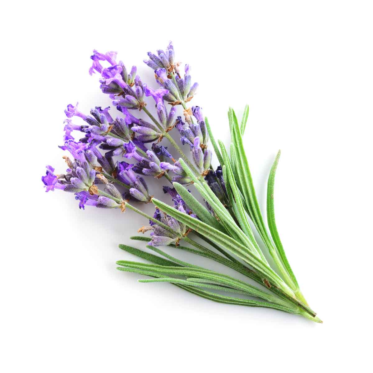 Chill contains botanical extracts found in lavender, delivering a familiar sweet flavor. -
