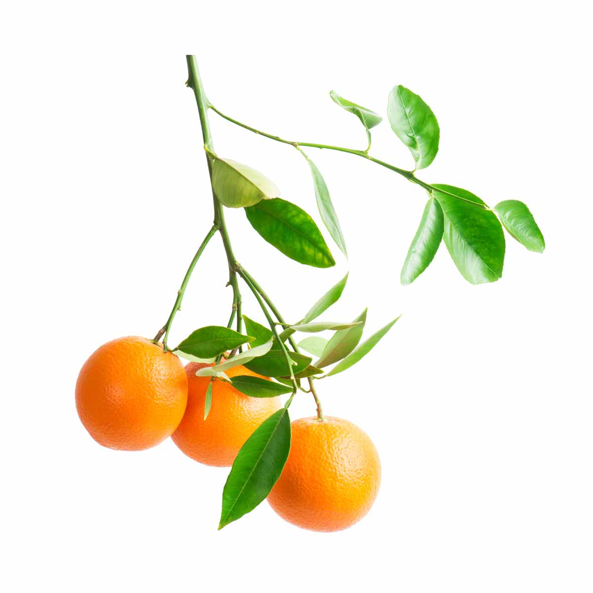 Botanical-Lucid-Mood-Energy-Citrus.jpg