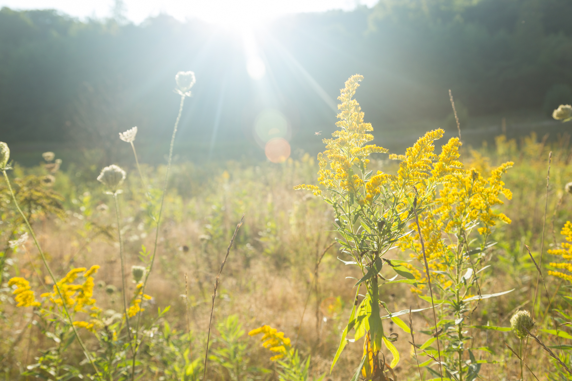 Late summer field in the Catskill Mountains of New York.