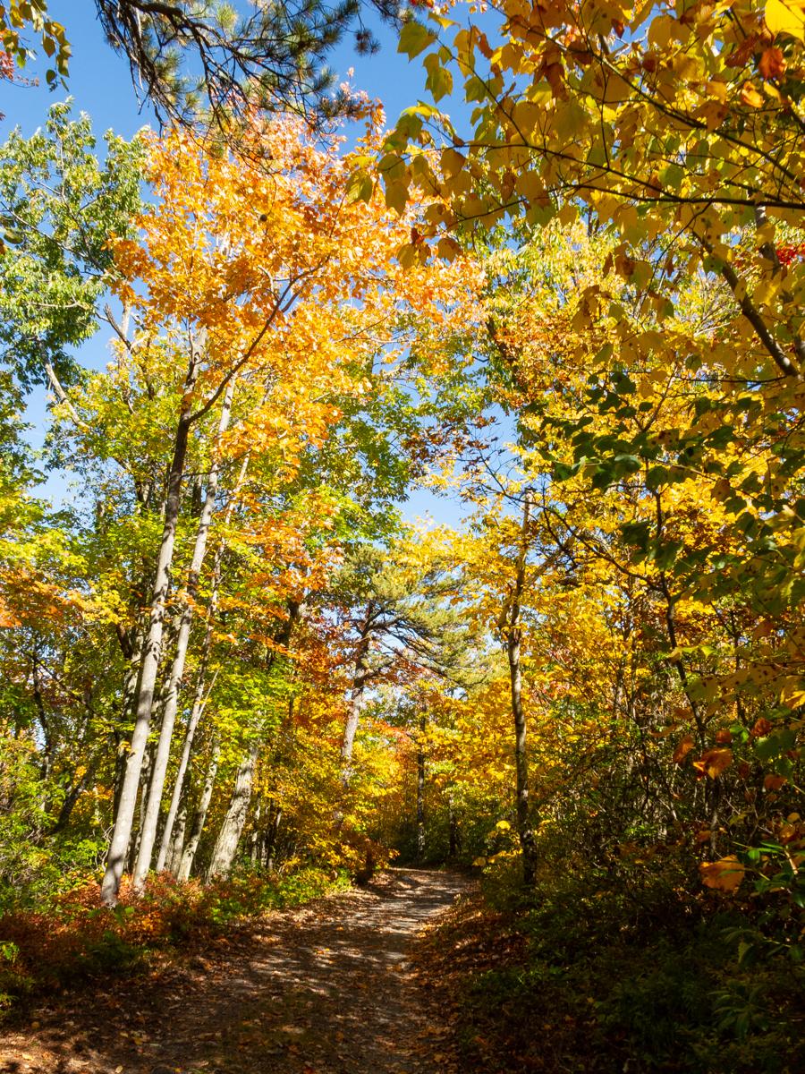 Fall is fabulous on the Shawangunk Ridge!!