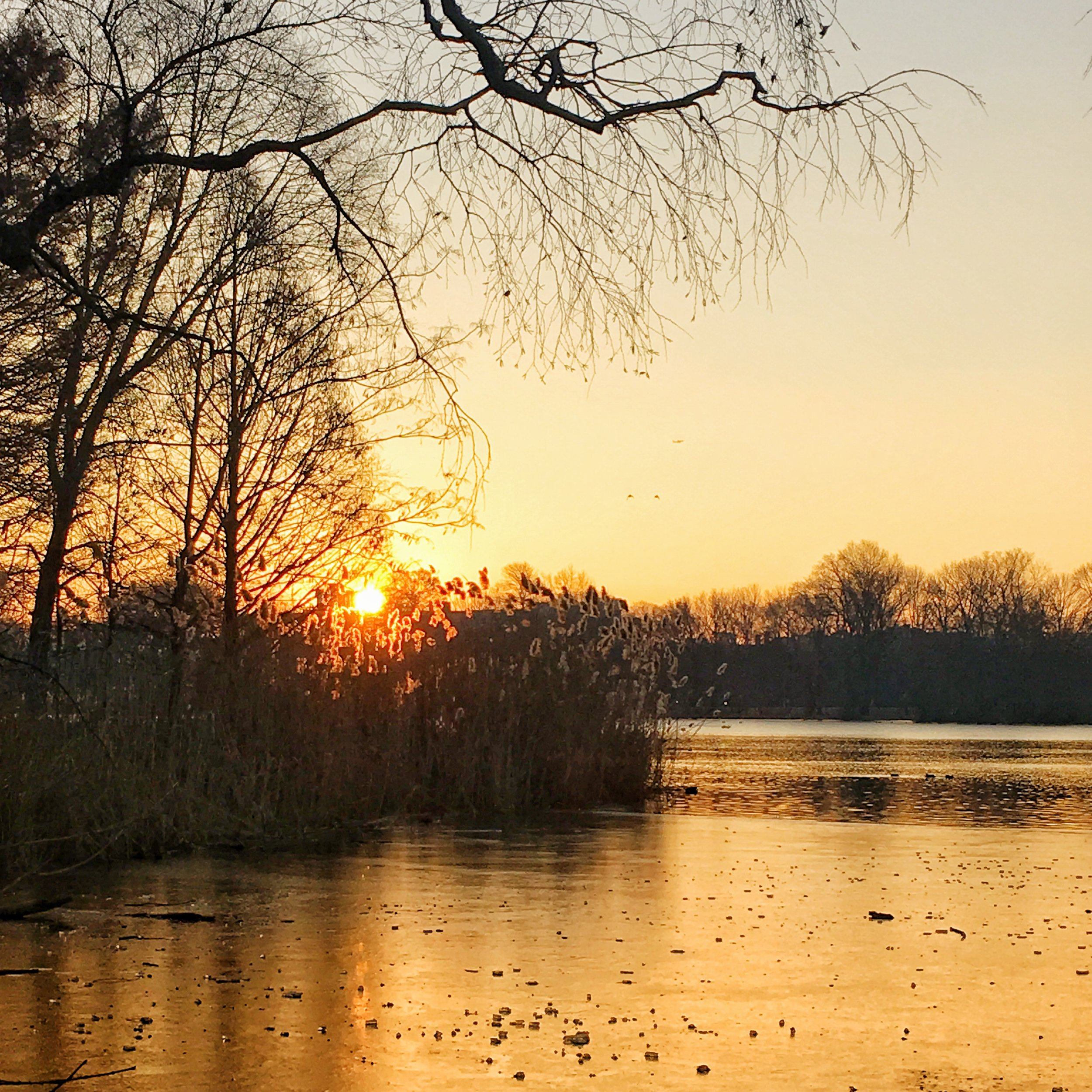 The Lake at Prospect Park.