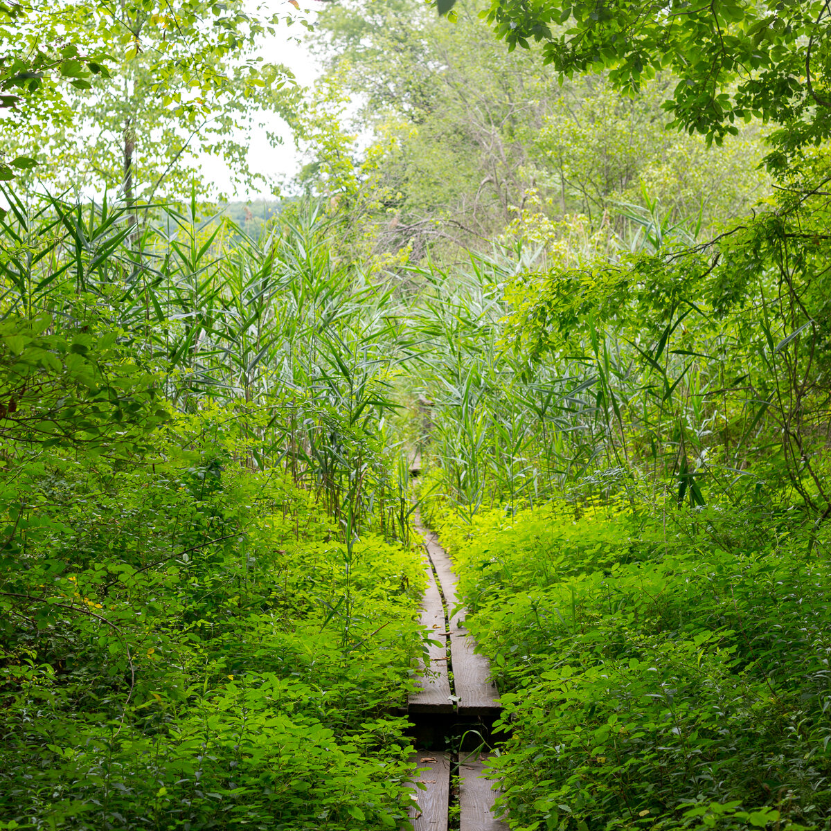 Volunteer on the AT! - The Appalachian National Scenic Trail, Wingdale, NY