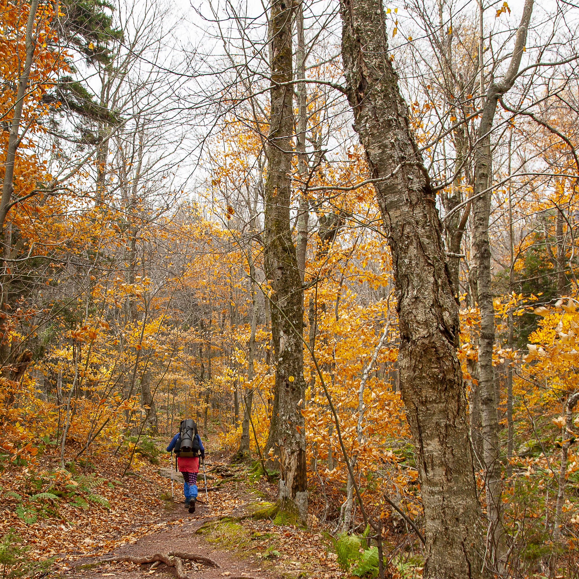 20121021_Hiking_Escarpment Trail with Sprout_0022.jpg
